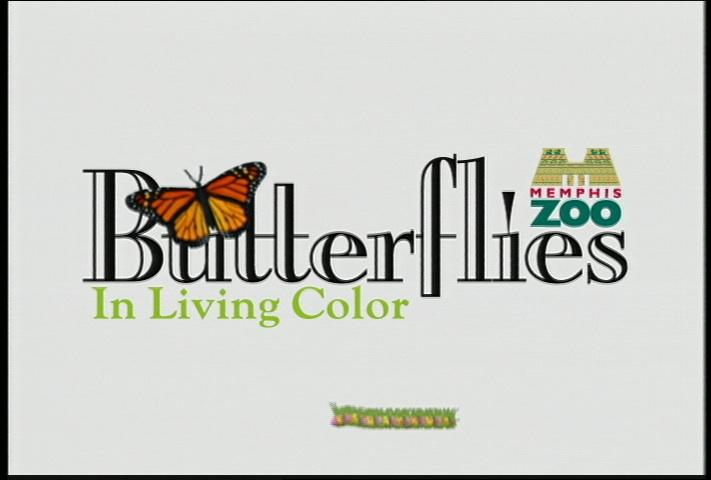 Memphis Zoo Butterflies